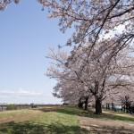 荒川赤羽 新河岸川緑地