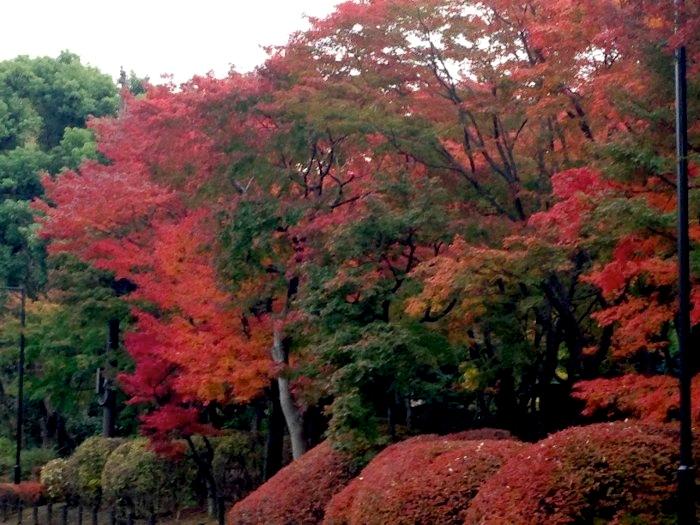 北の丸公園紅葉