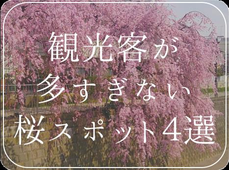 sakuraspot2