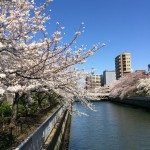 江東区大横川★桜