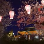 上野恩賜公園(桜並木・清水観音堂)