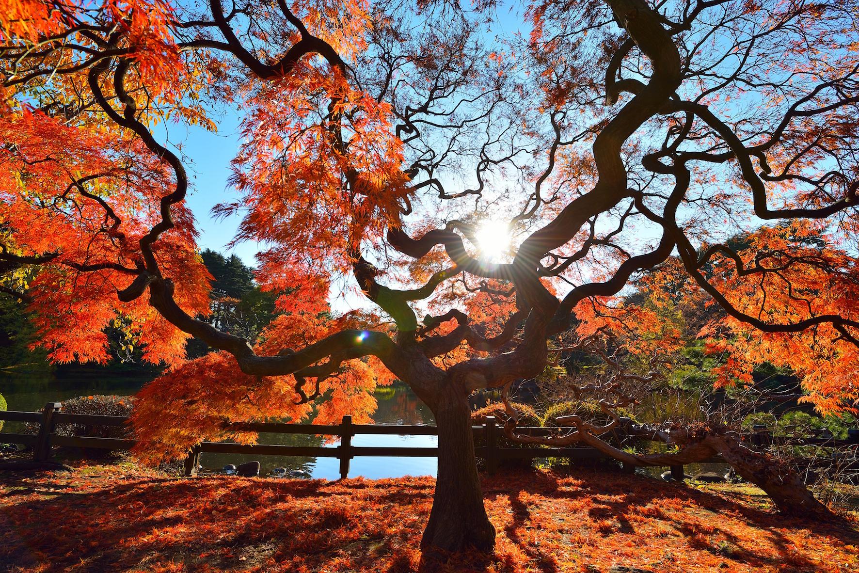 新宿御苑紅葉 のコピー