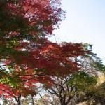 多摩川台公園 | 桜、あじさい、紅葉、展望台といつ行っても楽しめる公園