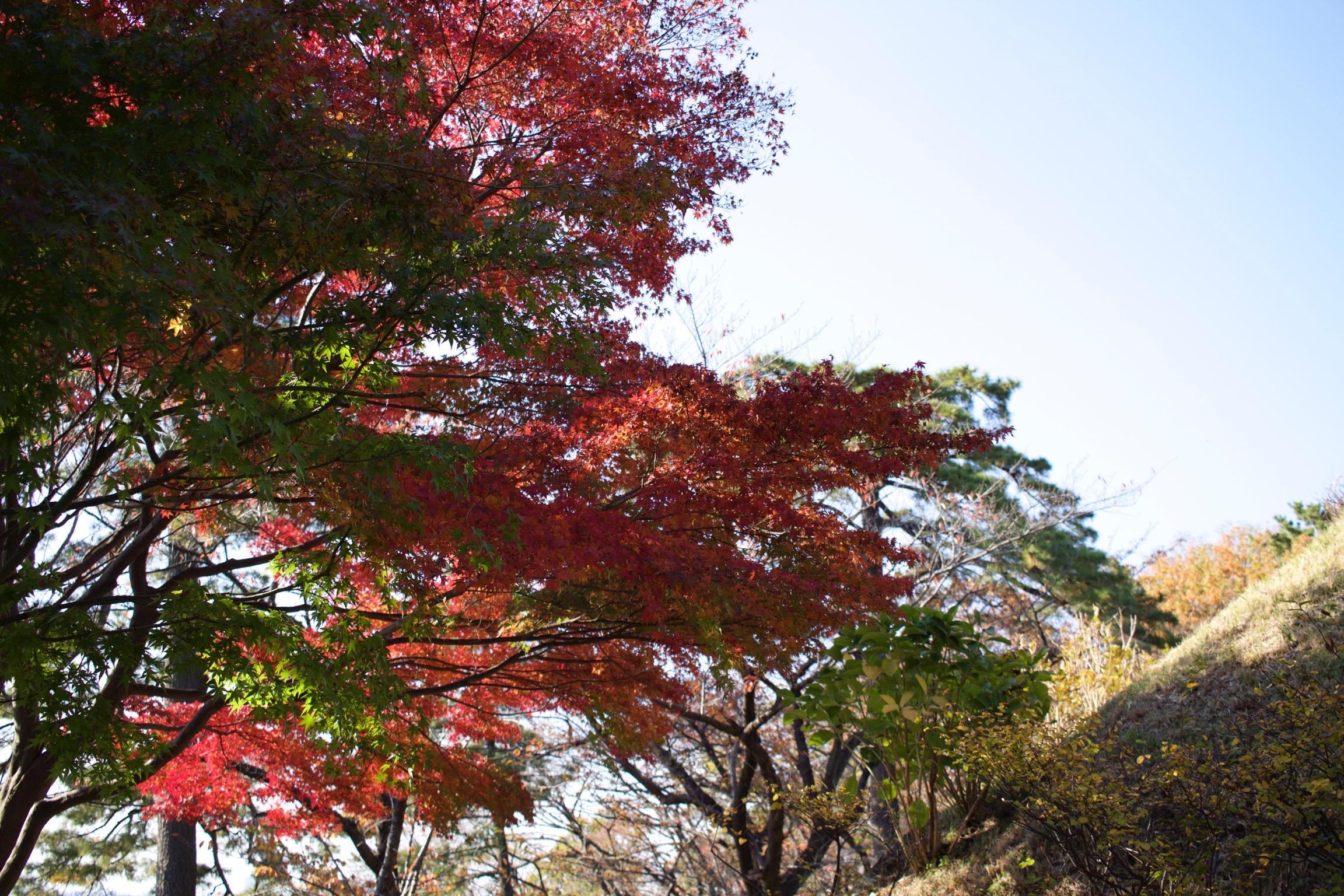 多摩川台公園1