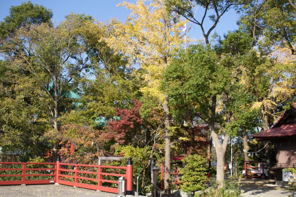 多摩川浅間神社2