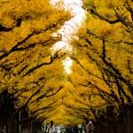 明治神宮外苑 | イチョウ並木と大正建築が織り成す絵画のような風景