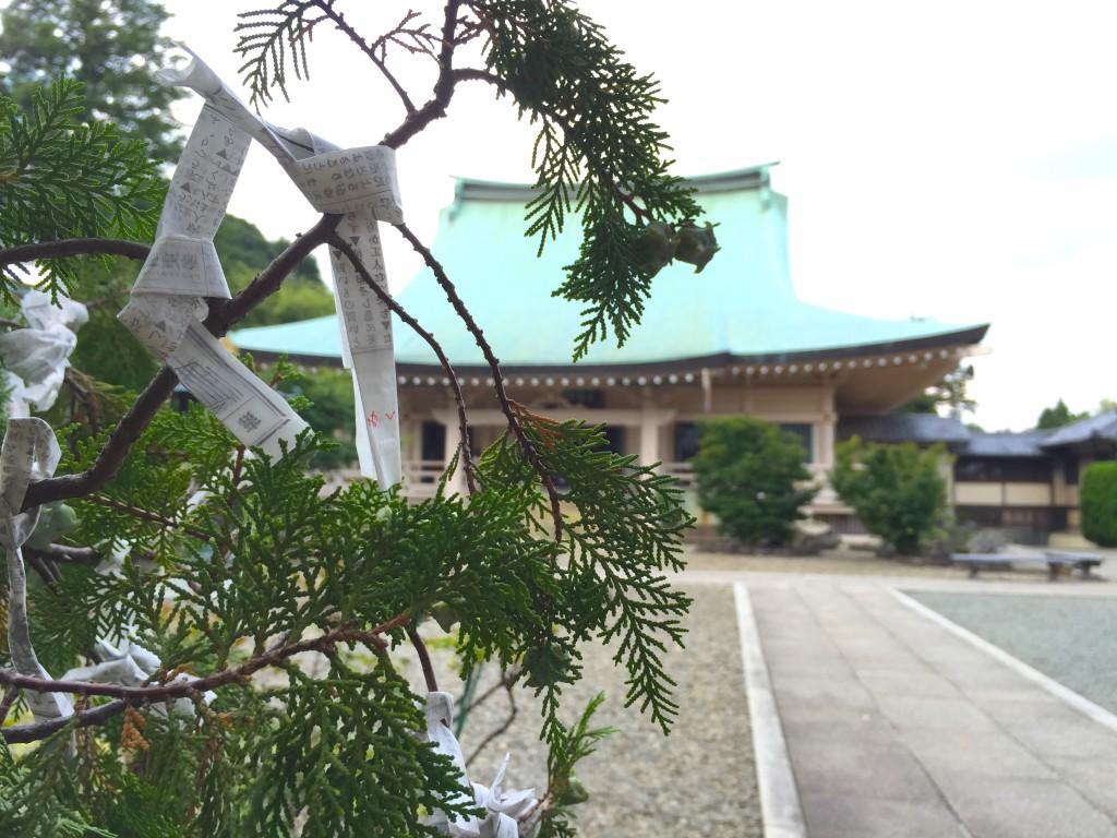 豪徳寺14