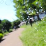 シャボン玉を綺麗に撮るコツ | 屋外、一眼レフで見たまま撮れる