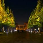 靖国神社 参道| 黄葉したイチョウ並木が黄金色に輝くライトアップ